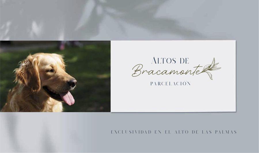 Perro Altos de Bracamonte