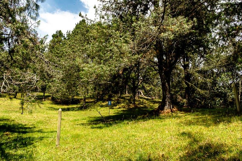 Lote No. 5 Altos de Bracamonte
